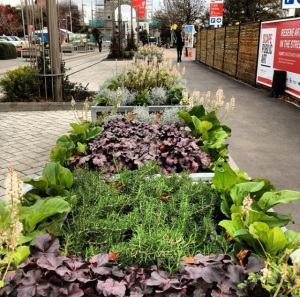 Public gardens in Christchurch shopping mall are part of efforts to improve the CBD. Photo: Katie Spain